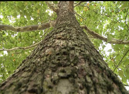 Concerns turn to trees as dry conditions prevail