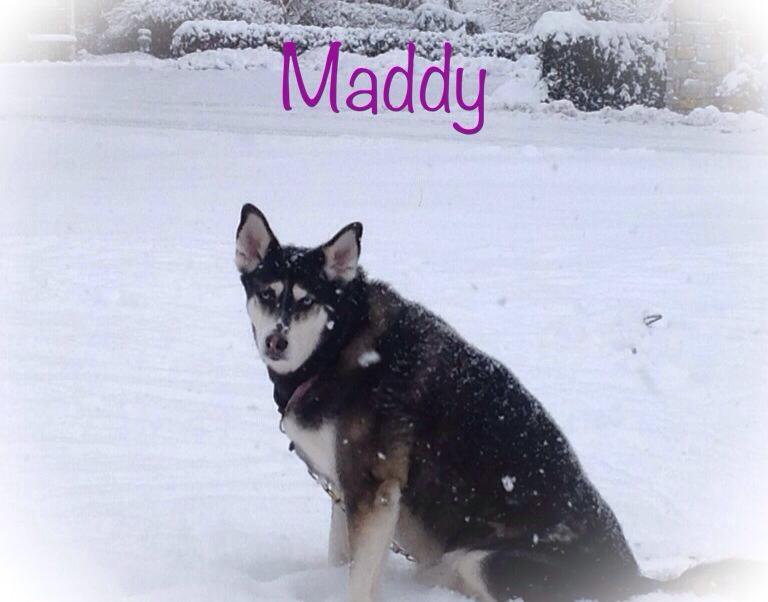 Bridget Davis McCreary with Maddy in Aurora