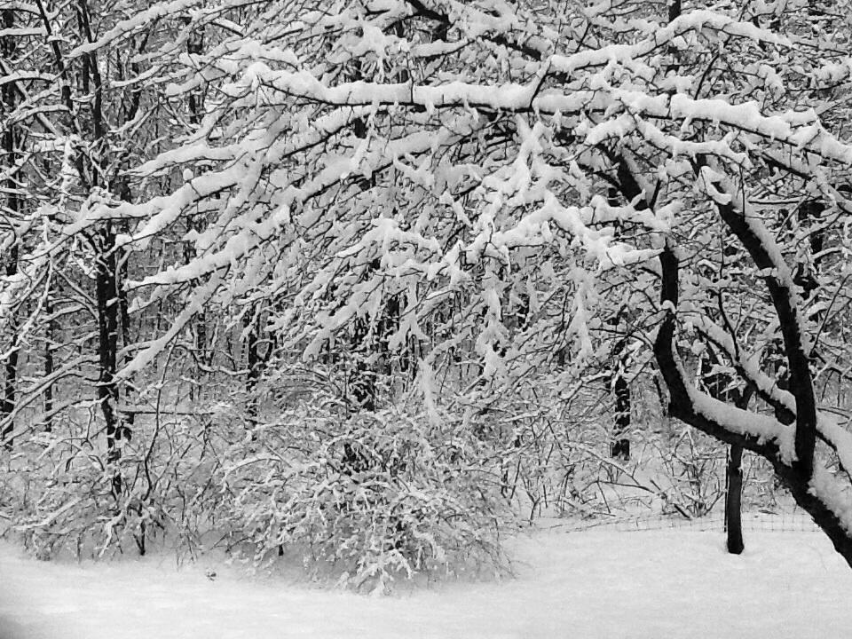 Snow in Noblesville
