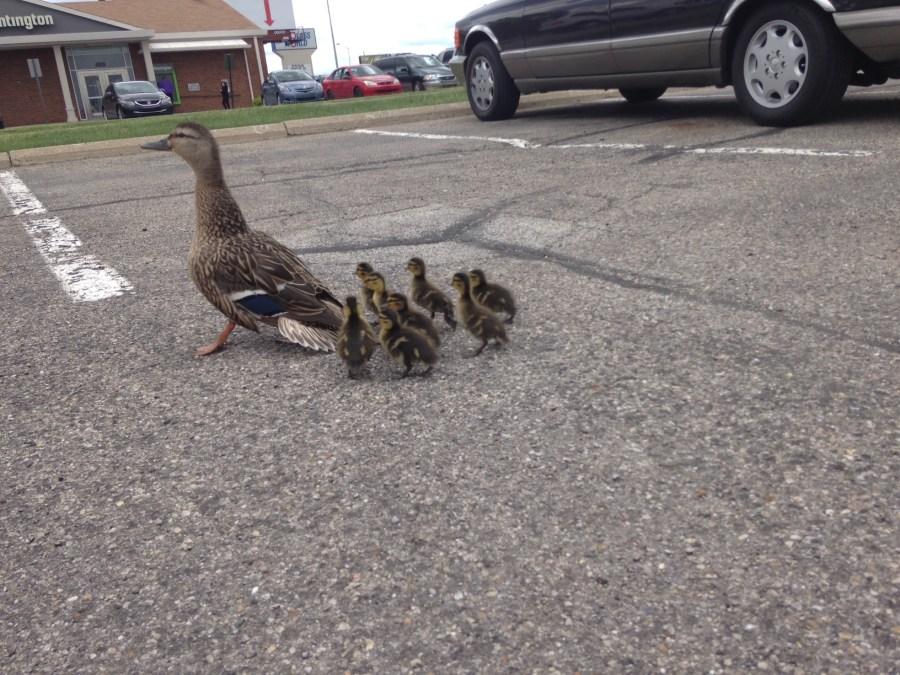 Duckies8