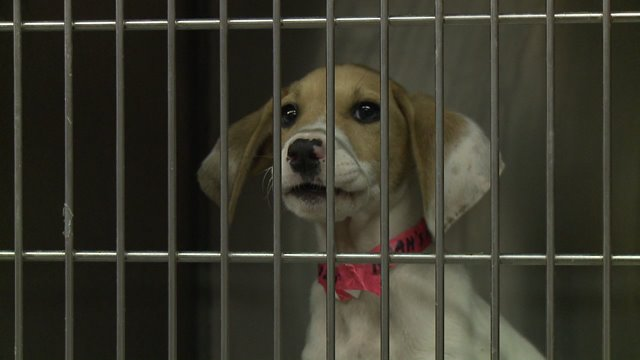 Parvo Exposed Puppies Illustrate Dangers Of Buying Pets On