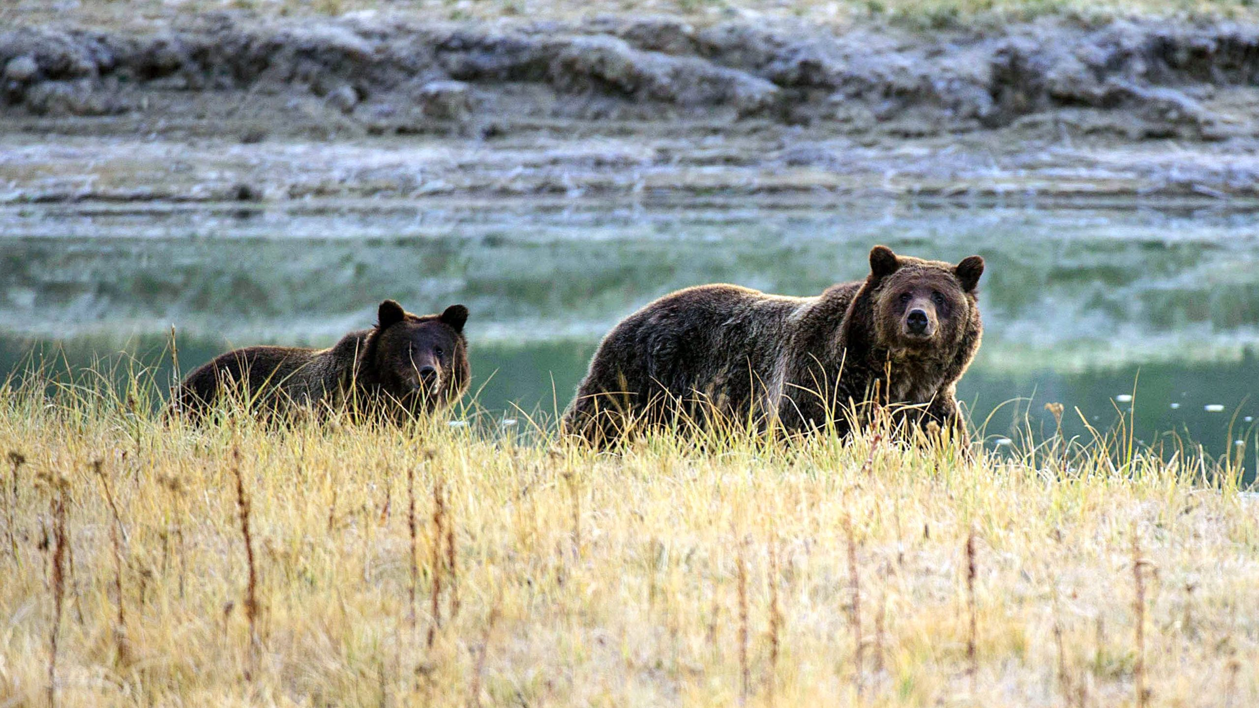 Grizzly bear kills camper in western Montana