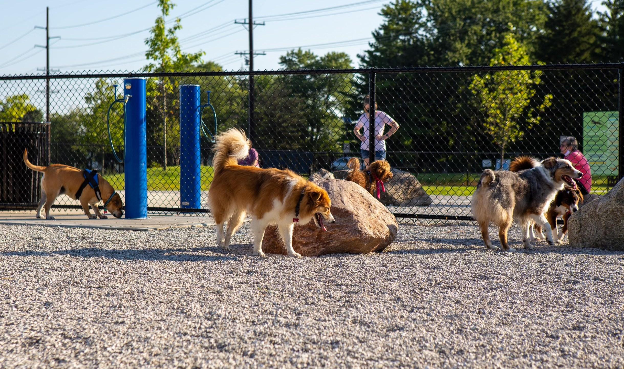 Dogs at Cardinal Bark Park