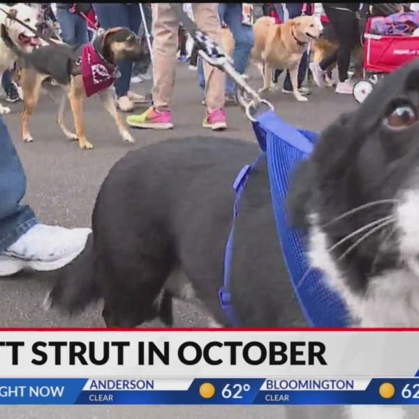 Indianapolis Humane Society Mutt Strut 2021