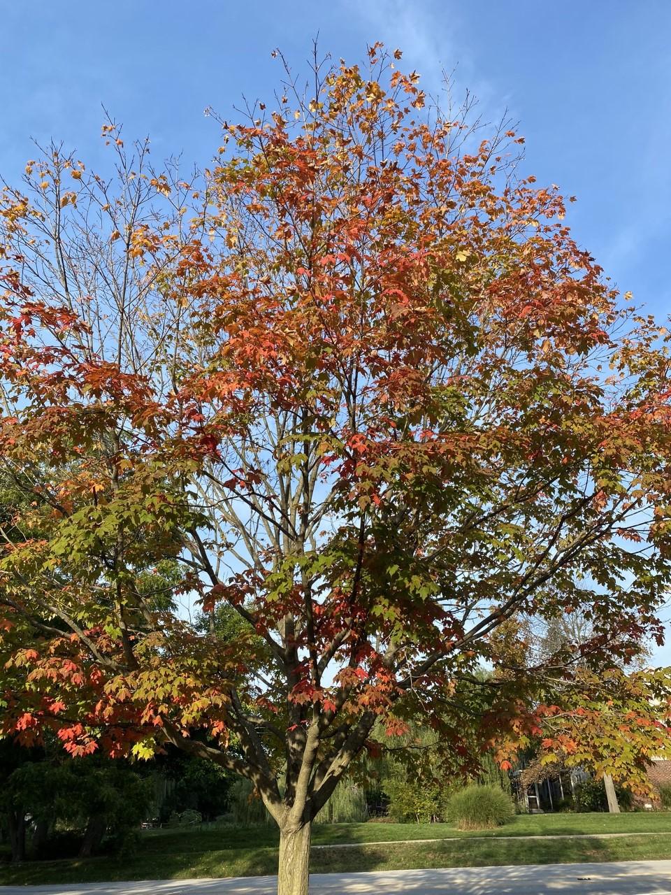 Fall foliage in Indiana